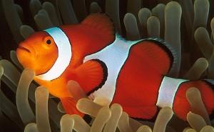 Philippinen, Tauchen in der Unterwasserwelt